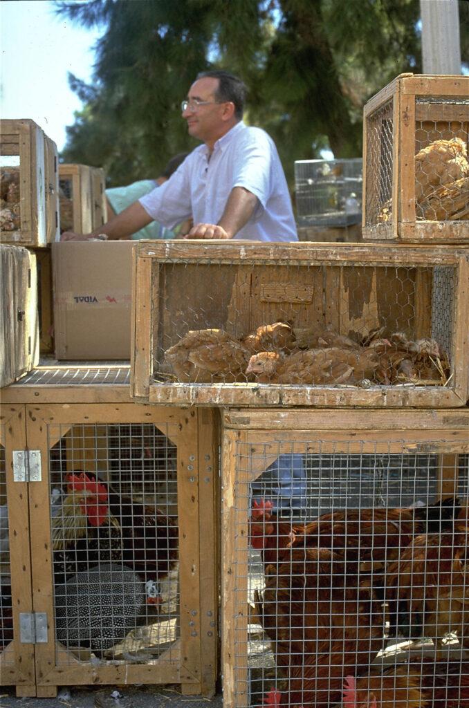 Vogelmarkt, Sineu