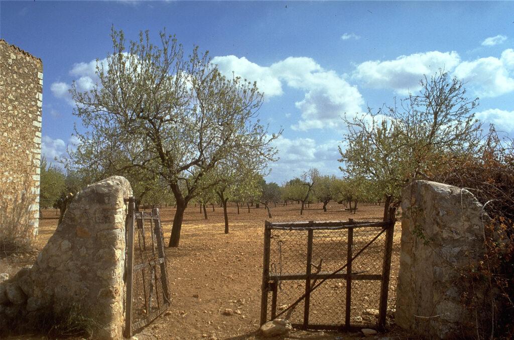 Es Pla de Mallorca