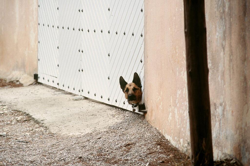 Hund in Cala Ratjada