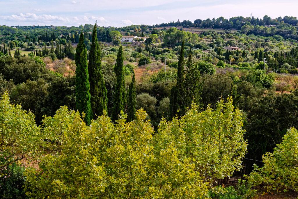 Landschaft in Campanet, Mallorca