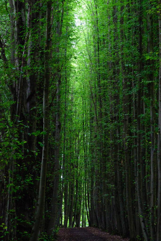 Wald bei Kalenborn