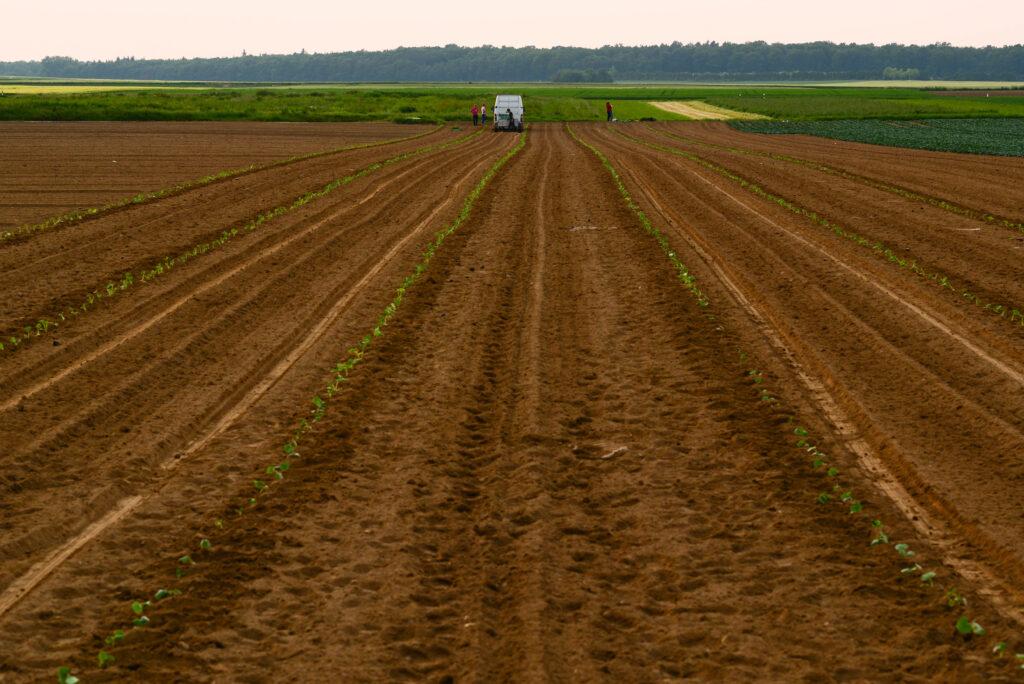 Landwirtschaft bei Rösberg