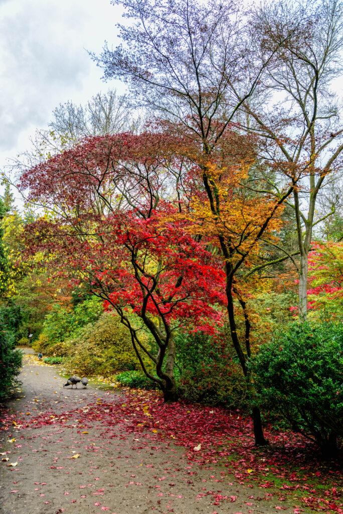 Forstbotanischer Garten, Köln